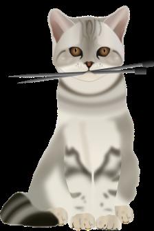 cat-1297689_1280