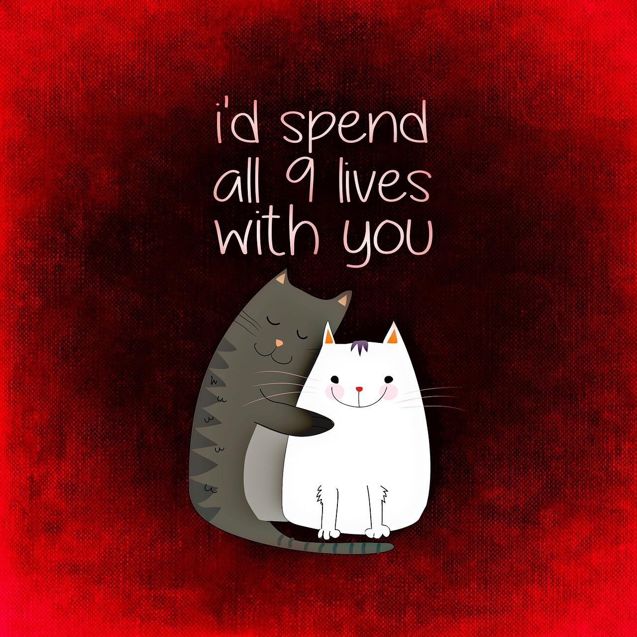 cat-859032_1280